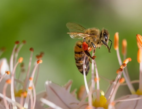 Florida Bees to Benefit from Pollinator Partnership